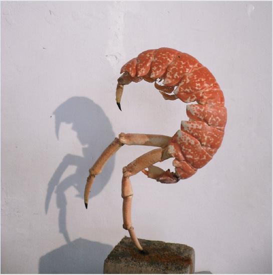 Neel Korteweg Buitelkreeft 2006