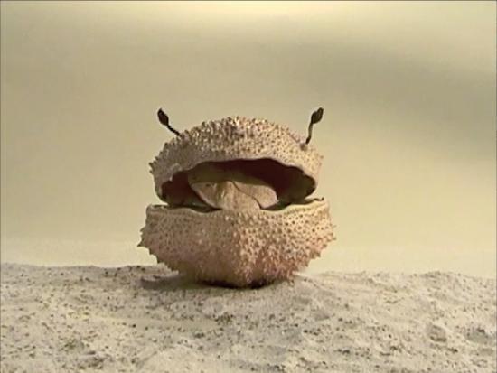 Neel Korteweg Filmstill I'm a crabnut