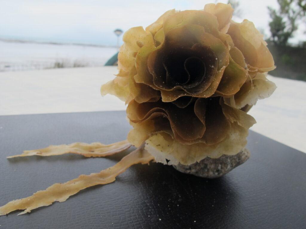 Neel Korteweg Zoute roos-1 gerold suikerwier 2012