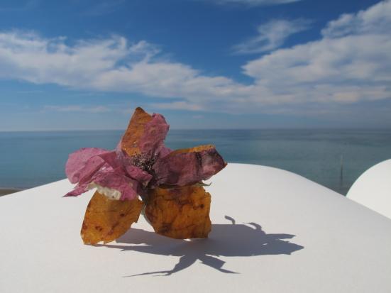 Neel Korteweg Zoute roos van zeewier